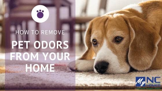 Removing pet stains and odors from your home